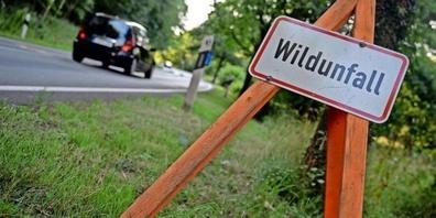 Jährlich werden schweizweit rund 20'000 Wildunfälle gemeldet.