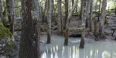 Die Bevölkerung will mehr Urlandschaften: Urwald bei Derborence auf Gemeindegebiet von Conthey VS. (Archivbild)