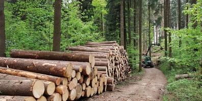 Holzschlag im Wald bei Gams.