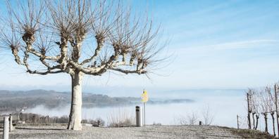 Wenn die Sonne bei Nebel und Raureif in Beringen aufgeht, sich der Nebel in Rüdlingen und Buchberg lüftet, die Amsel in Neuhausen ganz zaghaft ihr Liedlein anstimmt, die Schwäne zum ersten Mal im Rhein miteinander flirten und die Blumen in den Gärten blühen: dann ist bald Frühling.