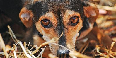 Bei lauter Knallerei leiden viele Haustiere unter schrecklicher Angst.