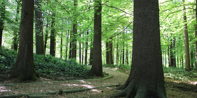Die Finnenbahn im Eichholz verläuft direkt zwischen den Bäumen.