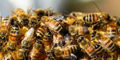 Die Bekämpfung von Schädlingen und Unkräutern mit Giftstoffen trifft auch Kleintiere vom Regenwurm bis zur Honigbiene.
