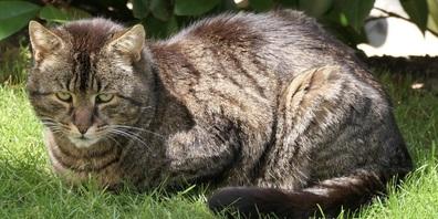 «Cool Cat» ist unauffindbar. Aber vielleicht wissen unsere Leser ja mehr...