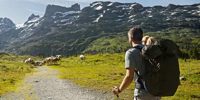Zwei Wanderer nähern sich einer Kuhherde.  Unter Umständen wäre es angezeigt, die Herde zu umgehen.
