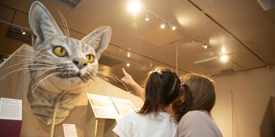 In der Sonderausstellung «Die Katze. Unser wildes Haustier» wird die Welt der Samtpfoten erlebbar. Auch wenn Katzen seit rund 11'000 Jahren an der Seite des Menschen zu finden sind, bleibt ihr Wesen für uns Menschen rätselhaft.