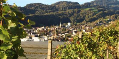 Blick aus den Reben auf das Weindorf Berneck
