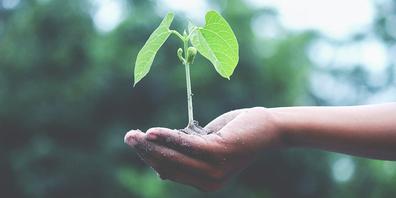 Unter anderem Laub- und Nadelgehölze sowie Obstbäume ziehen es vor, im Herbst angepflanzt zu werden.