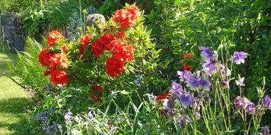 Farben und Formen, die bezaubern: Am Samstag und Sonntag sind schöne Gärten zu bestaunen.Bild Colin West