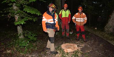 Markus von Wartburg bespricht mit drei Teilnehmern des Holzerkurses die Fällung eines Baumes nach.