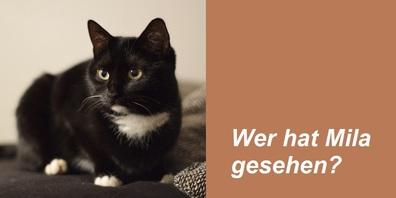 """Seit Dienstag vermisst: """"Mila"""" aus Waldstatt."""