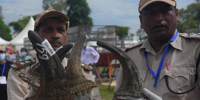 Als Zeichen gegen den illegalen Handel mit Nashorn-Hörnern haben indische Behörden 2489 alte Hörner verbrennen lassen. Damit machte die Regierung am Weltnashorntag am 22.09.2021 auf die Notwendigkeit aufmerksam, die bedrohte Tierart zu schützen. F...