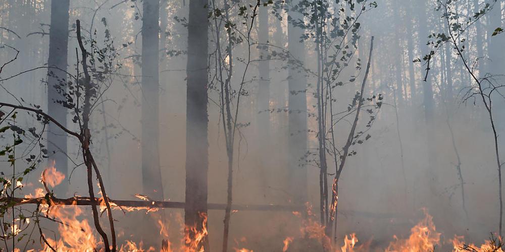 Flammen lodern in einem Wald. Wegen der schweren Waldbrände im Osten Russlands versinken immer mehr Dörfer und Städte im Rauch. Mehr als 105 Siedlungen und die Großstadt Jakutsk in der stark betroffenen sibirischen Region Jakutien (Republik Sacha)...