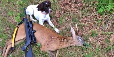 Ein erlegtes Tier mit dem Jagdhund.