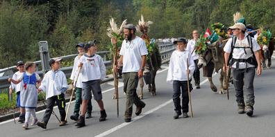 Erstmals seit mehr als 20 Jahren kehrten Älpler Reto Blöchlinger und seine Helfer mit der Herde von der Alp Bärlaui zu Fuss nach Tuggen zurück.