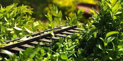 Pflanzen schneiden für die Sicherheit