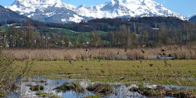 Das Naturschutzgebiet Kaltbrunner Riet