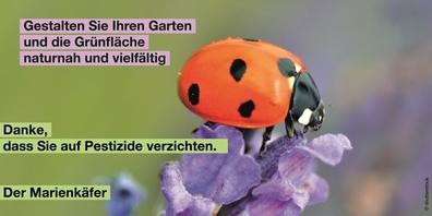 Auszug aus einem der Kampagnenbilder gegen Pestizide, hier mit einem «dankbaren» Marienkäfer.