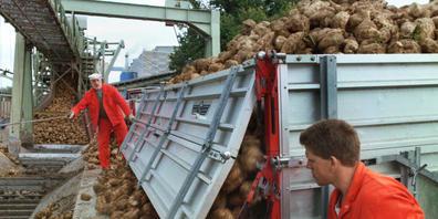 Anlieferung von Zuckerrüben in der Zuckerfabrik Frauenfeld, wo am Mittwoch mehrere Wagen eines Güterzugs entgleisten. (Archivbild)