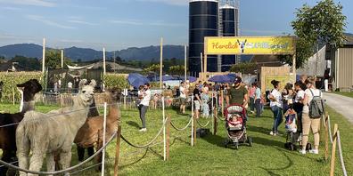 Am zweitletzten Wochenende waren Lamas sogar live vor Ort.