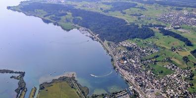 Die Blaualgen sind entlang des gesamten Ufers zwischen Schmerikon und Rapperswil-Jona nachweisbar.