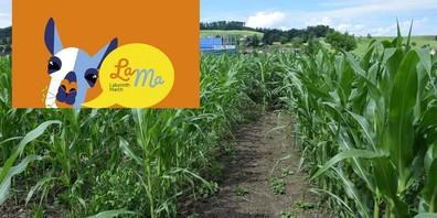 Ab ins Maislabyrinth - wir haben die Tickets dazu.