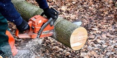 Beim Fällen eines Baumes wurde ein Mann tödlich verletzt.