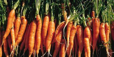 """Nicht alle Rüebli schaffen den Weg vom Acker auf den Teller: In Zürich soll mit einem """"Foodsave-Bankett"""" für das Thema der Lebensmittelverschwendung sensibilisiert werden. (Symbolbild)"""