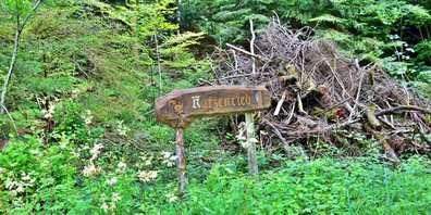 Im Chatzenried entsteht ein Naturwaldreservat.