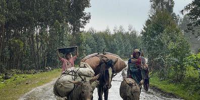 dpatopbilder - Dorfbewohner verlassen mit Eseln, die mit ihren Habseligkeiten beladen sind, ihre Häuser in der Region Amhara im Norden Äthiopiens. Foto: Uncredited/AP/dpa