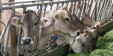 In vielen Ställen würde es mit einem Futterzukaufverbot schwierig werden, die Tiere zu füttern