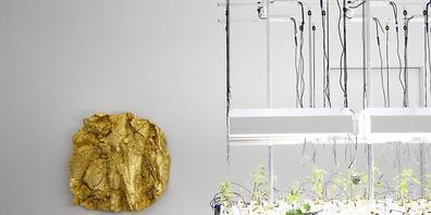 """Gewächstische, auf denen Gemüse ohne Erde wächst, von Mirko Baselgia sind in der Ausstellung """"LandLiebe. Kunst und Landwirtschaft"""" im Bündner Kunstmuseums zu sehen. Im Hintergrund hängt ein vergoldeter Abguss eines Ackers von Asta Gröting."""