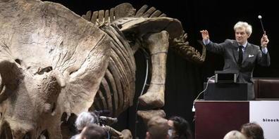 """Ein 66 Millionen Jahre altes Triceratops-Fossil ist in Paris für 66 Millionen Euro versteigert worden. Es heisst """"Big John"""" und ist acht Meter lang."""
