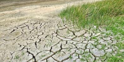 Erste Auswirkungen des Klimawandels, etwa in Form von Trockenheit, sind bereits spürbar. (Symbolbild)