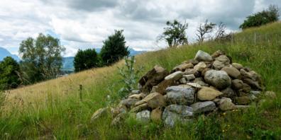 Steinhaufen und andere Kleinstrukturen bieten zahlreichen Tierarten einen wichtigen Lebensraum.