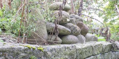 Zauneidechsen halten sich gerne an Orten auf, an welchen sie sich vor Fressfeinden verstecken können. Eine Trockenmauer bietet ihnen diesen idealen Schutz.