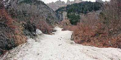 Die Lawine im Panier-Tobel stiess dieses Jahr wieder einmal bis in den oberen Steigwald (Loch) vor.