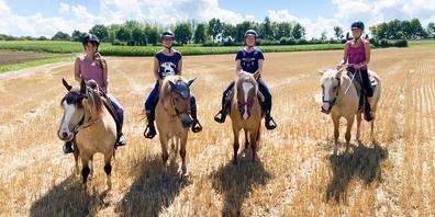 Das Interesse an Pferden hat wegen Corona deutlich zugenommen.