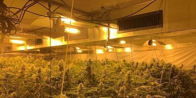 Über 400 Pflanzen: die ausgehobene Hanf-Indoor-Plantage in einer Gewerbeliegenschaft in Dübendorf.