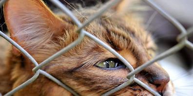 Nur weil eine Katze gehbehindert ist, muss sie nicht eingesperrt werden: Die Gefahr eines Unfalls besteht auch für gesunde Tiere, hält das Verwaltungsgericht fest. (Symbolbild)