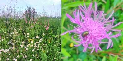 In einem Naturgarten fühlen sich viele Lebewesen wie etwa Insekten wohl.