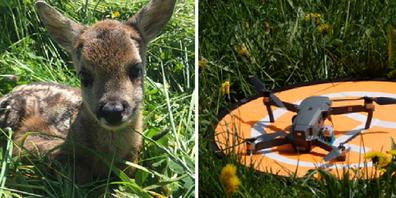 Dank einer Drohne konnte das Rehkitz entdeckt und vor seinem Tod gerettet werden.