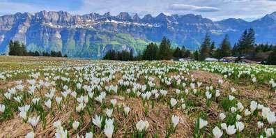 Der Frühling am Flumserberg erwacht und die Attraktionen öffnen.