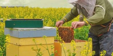 Täter mit Fachkenntnissen stahlen übers Wochenende Bienenvölker im Schänner Ortsteil Rufi. (Symbolbild)