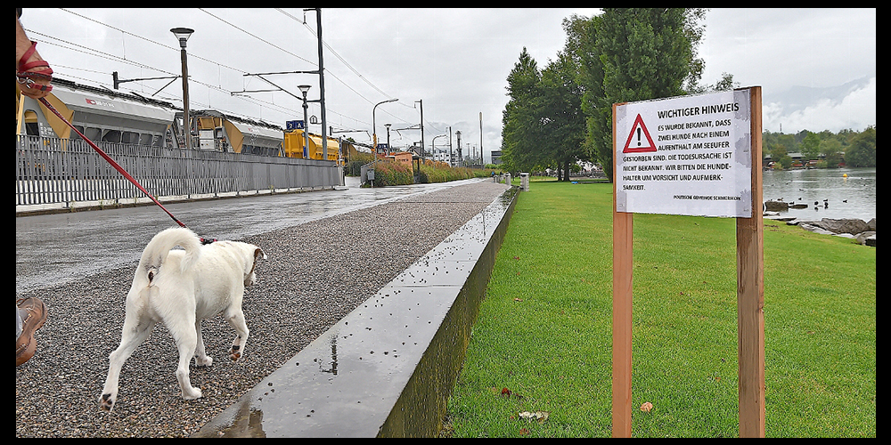 Gut aufpassen: Hundehalter und Vierbeiner sollten Obersee und Aabach in Schmerikon in diesen Tagen meiden.
