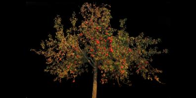 Obstbäume brauchen viel Pflege.
