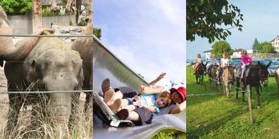 Egal ob in Knies Kinderzoo, im Freizeitpark Atzmännig oder beim Eseltrekking – im Linthgebiet können Kinder viel erleben.