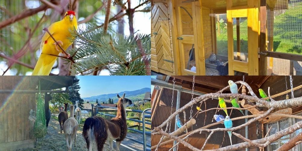 Auf dem Grundstück von Doris Jud Vogt und ihrem Mann Werni Vogt finden viele unterschiedliche Tiere ein liebevolles Zuhause.