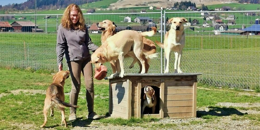 Romy Kessler, Inhaberin der Hundebetreuung Kessler in Schübelbach, mit ihren tierischen Gästen.