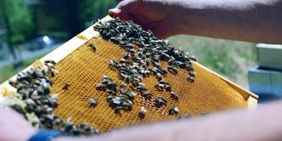 Bei der Exkursion erfährt man, wie existenziell die Bienen für die Natur sind.